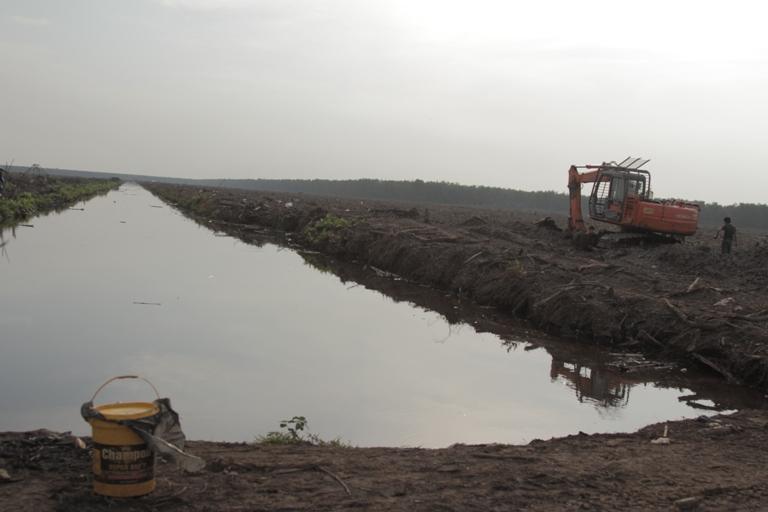 Hamparan lahan adat Senyerang yang kini disulap dan ditanami akasia-ekaliptus oleh PT. WKS. Areal ini adalah kawasan gambut dalam.