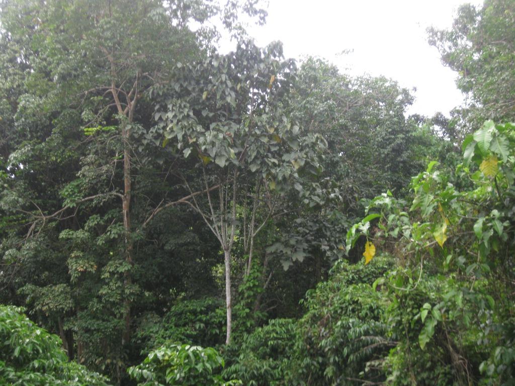 Foto KpSHK. Pengelolaan Hutan Lestari