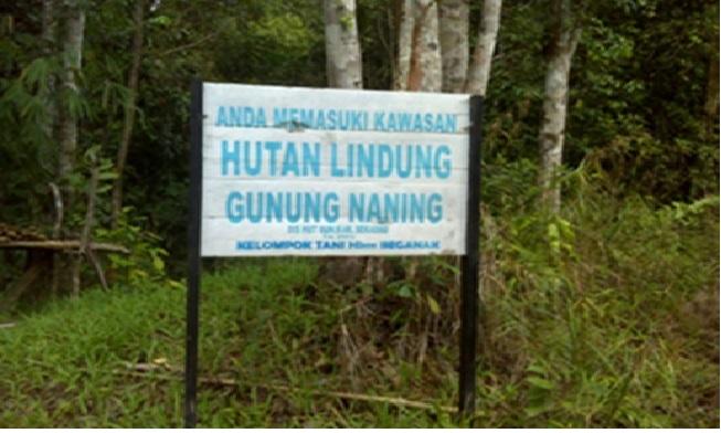 Lokasi Hutan Lindung Gunung Naning. HKm Beganak. Foto KpSHK