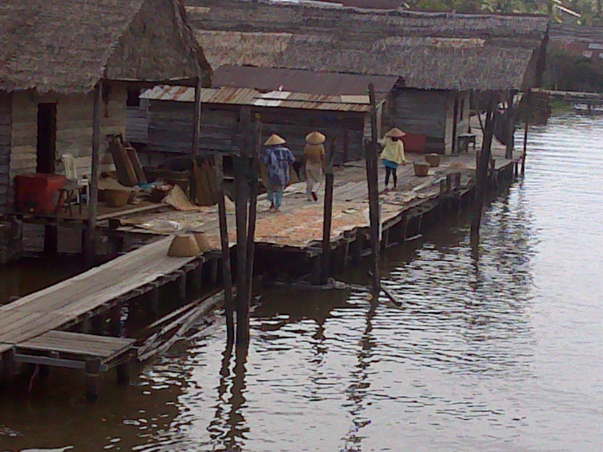 Padang Tikar di Muara Sungai Kapuas. Foto KpSHK