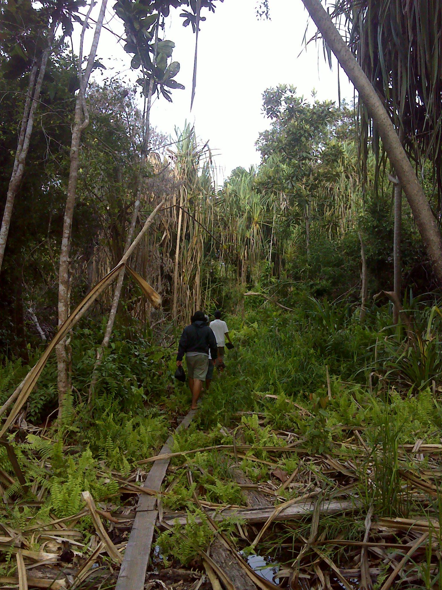Tutupan Vegetasi. Padang Tikar. Foto KpSHK