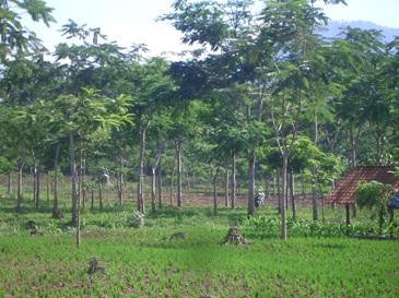 Lokasi Wilayah Kelola Kelompok Tani JAKETRESI di Zona Rehabilitasi (Doc.KAIL)