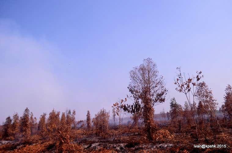 kebakaran_hutan_kpshk