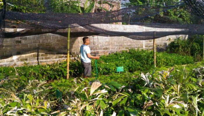Perawatan bibit tanaman di penangkaran Santong