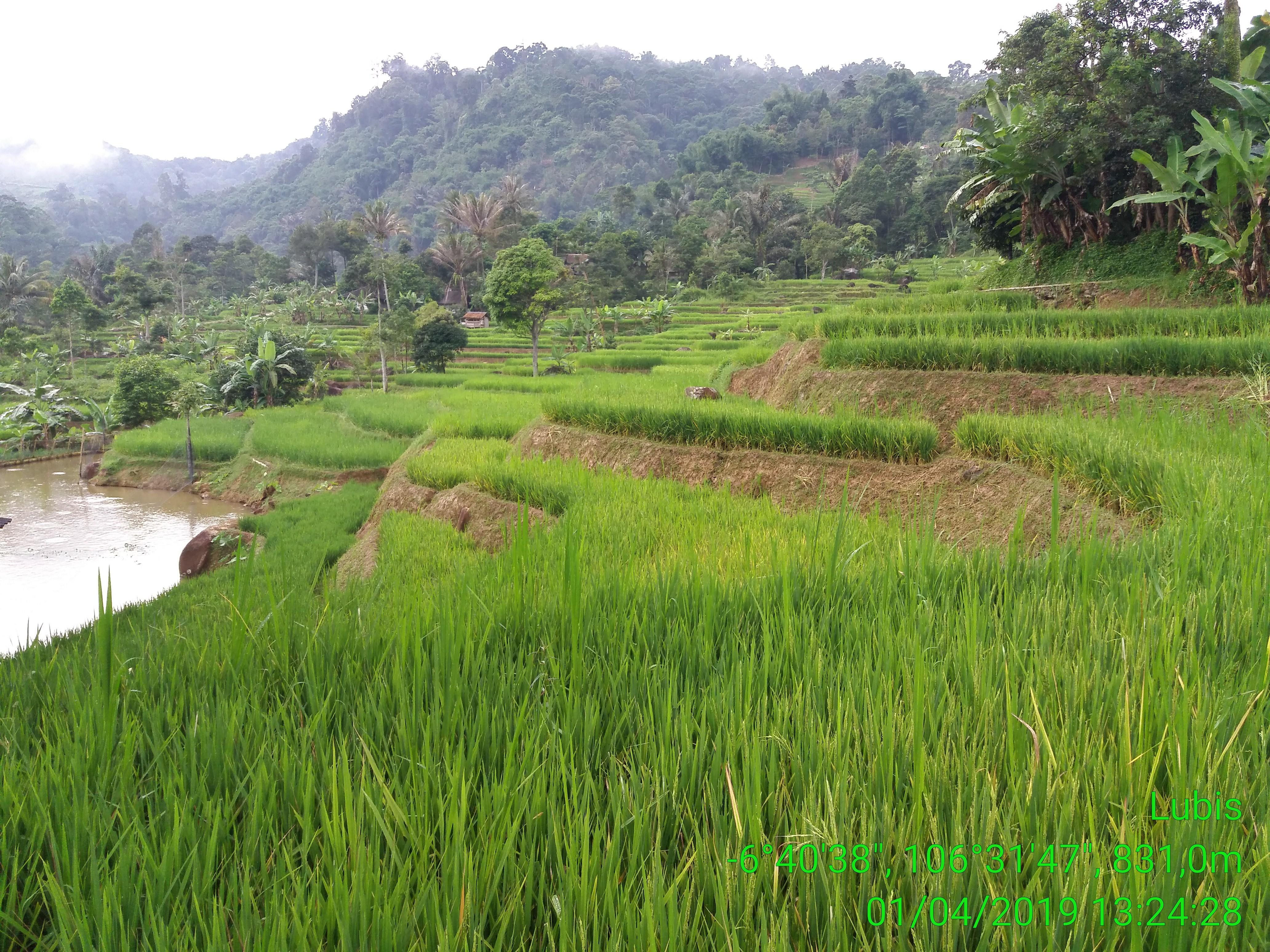 Desa Malasari
