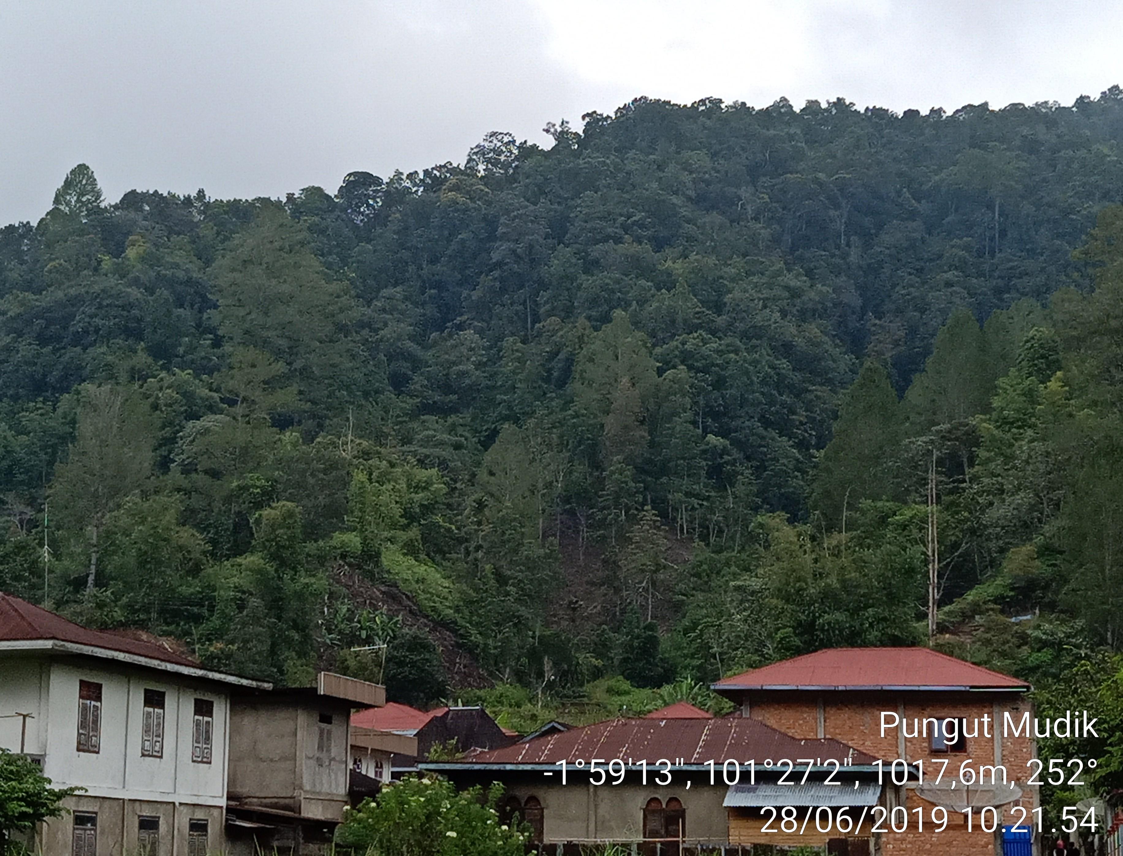 Kawasan Hutan Adat Pungut Mudik - LTA - KpSHK
