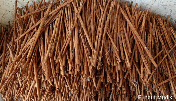 Koerintje Cinnamon - LTA - KpSHK